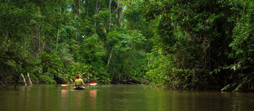 Kayak In The Amazon Rainforest Brazil Para Kito